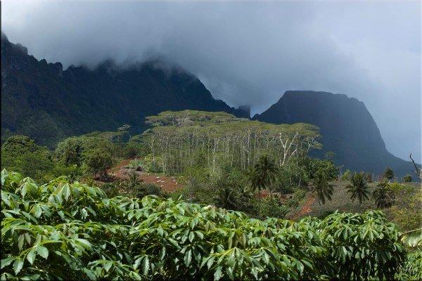 Tahiti-Moorea-13