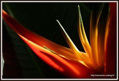 4.Polynésie 2013-001