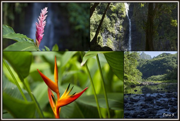 4.Nature tahitienne